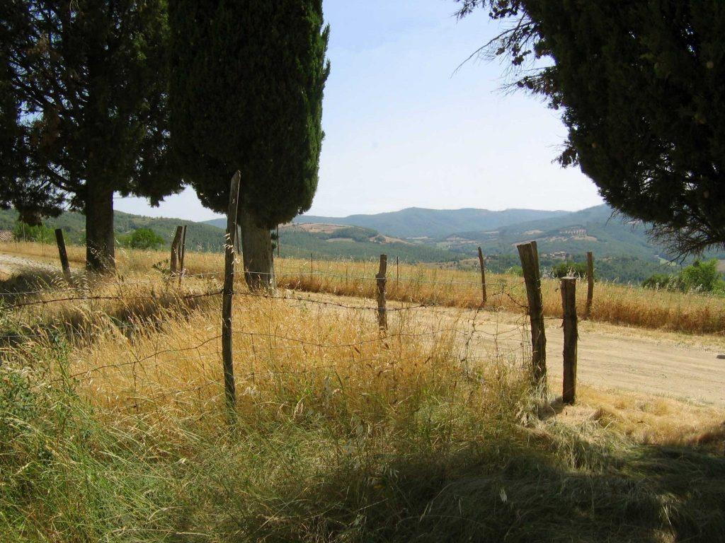landscapew